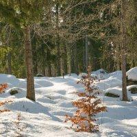 Краски марта :: liudmila drake