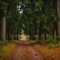 Осень в зелёном лесу :: Алексей (GraAl)