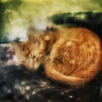 Сладкие сны. :: Вера Катан