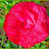 В застывших каплях дождя... :: Светлана