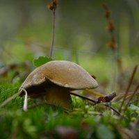 В лесных травах :: Алексей (GraAl)