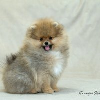 Великолепный мальчуган! :: Дмитрий .