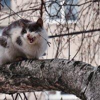 Весны этюды. Вчера наконец-то хоть коты прилетели... :: Александр Резуненко