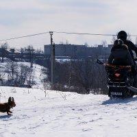 Догонялки )) :: Алексей le6681 Соколов