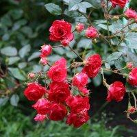 Красный сад :: Екатерина