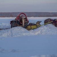 О зиме, о закате и о лошадках... :: Александра