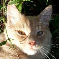 Солнечный портрет!... :: Лидия Бараблина