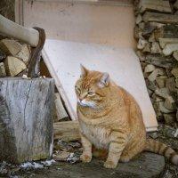 Кот мясника :: Ирина Полунина
