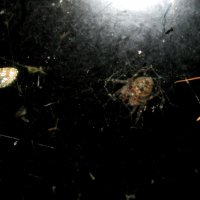 А за окном своя ночная жизнь :: Светлана Рябова-Шатунова