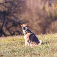 Моя собака-Кира. :: Alexander Furasev
