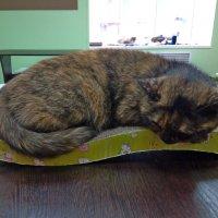 Кошка из котокафе :: Andrew