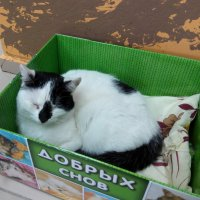 Кот из котокафе :: Andrew