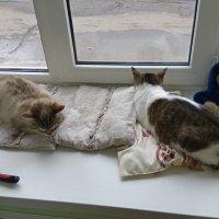 Кошки из котокафе :: Andrew