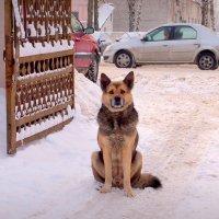 он тоже ждёт тепла... :: Александр Прокудин