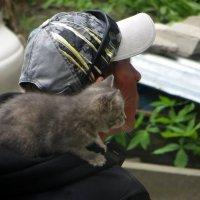 Котёнок :: Татьяна Смоляниченко