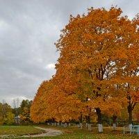 Осень в городе :: Геннадий