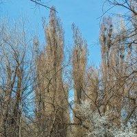 Начало весны в аллеях :: Юрий Яловенко