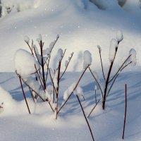 Пушистый снег. :: Жанна