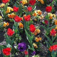 Цветы 1 :: Валерий Дворников