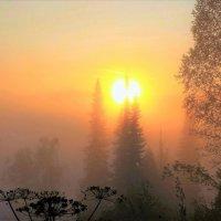 Солнце будит сонный лес :: Сергей Чиняев