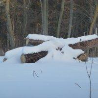 Лес рубят, щепки летят :: Raduzka (Надежда Веркина)