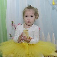 Цыплёночек :: Ольга Русакова