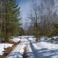 Тает снег уставшей ностальгией... :: Лесо-Вед (Баранов)