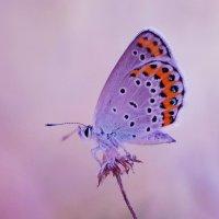 бабочка :: Стас