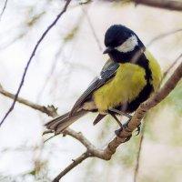 птичка-невеличка :: Ирина Масальская