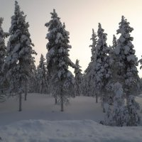Швеция :: Mari Kush