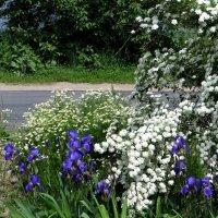 Май раскрасил мир зелёным, белым, розовым, весёлым! :: Татьяна Смоляниченко