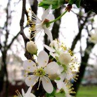 Скромное обаяние цветов на деревьях. :: Вячеслав Медведев