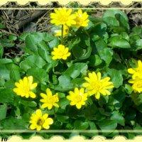 Первый привет от Весны! :: Нина Бутко