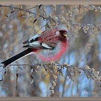 Зимняя нежность :: Лидия (naum.lidiya)