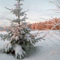 Два деревца :: Sergey Chelishev