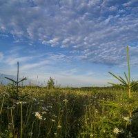 Тропинка в поле :: Sergey Chelishev