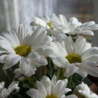 Цветы Марта! :: Татьяна Гусева