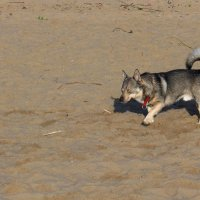 Собака на пляже :: Nina Yudicheva