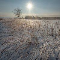 Замерзшее болото :: Fuseboy
