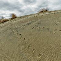 На песке :: Владимир Самсонов