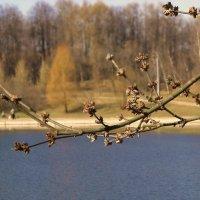 Солнечный апрель :: Ирина Via