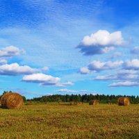 Урожай :: Sergey Chelishev