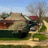 Апрель - цветут сады. Снято из окна поезда. Краснодарский край :: Татьяна Смоляниченко