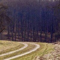 Дорога в лес. :: Надежда