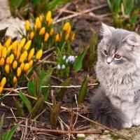 Первая весна Мальвины:) :: Татьяна Евдокимова