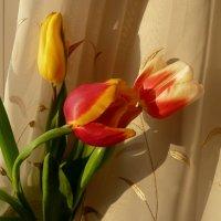 Весна в доме... :: Лидия Бараблина