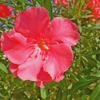 Аленький цветочек :: Raduzka (Надежда Веркина)