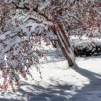 Первый снег :: alteragen Абанин Г.
