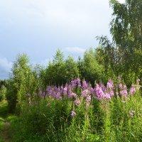 Дорога к лесному озеру... :: Елена Майорова