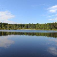 Асташовское озеро в Чухломских лесах... :: Елена Майорова